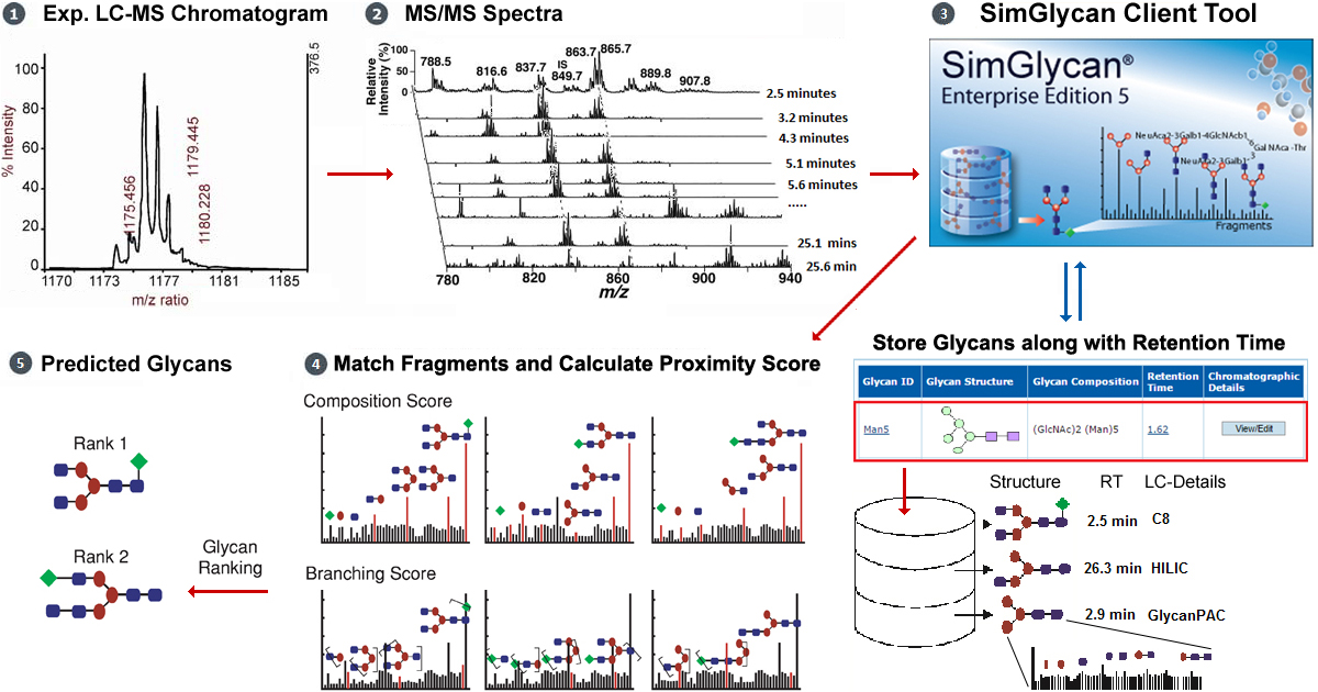 N-Linked Glycan Analysis