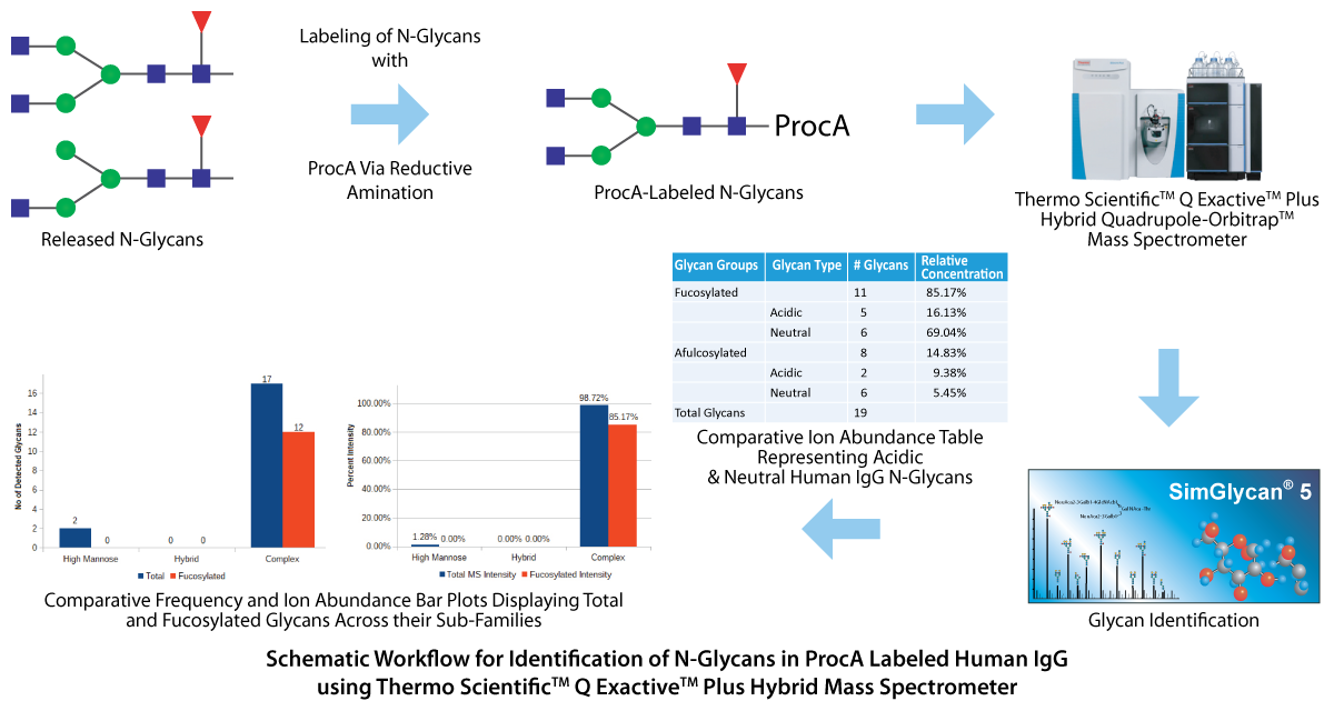 Schematic Workflow for Identification of N-Glycans in ProcA Labeled Human IgG